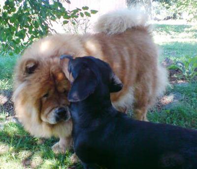 две собак на улице